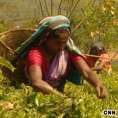 CNNGo Sri Lanka Ceylon Tea Farm