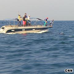 CNNGo Sri Lanka whale watching