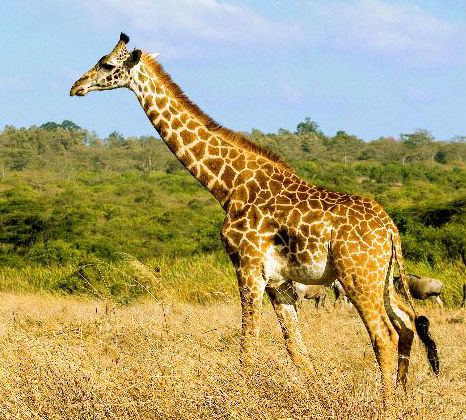 All about Australian Savanna Biomes - Trip Planner and Travel Guides