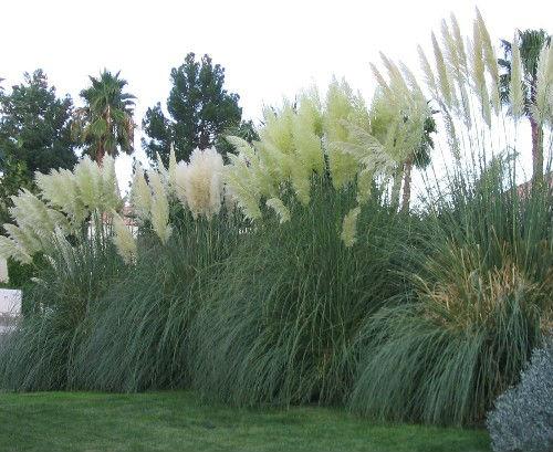 Pampas Grass Tours