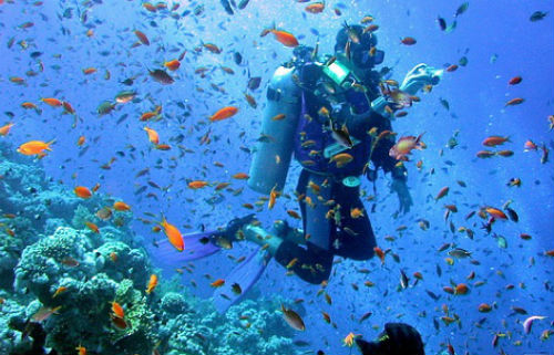 Diving Experience at Galapagos Island