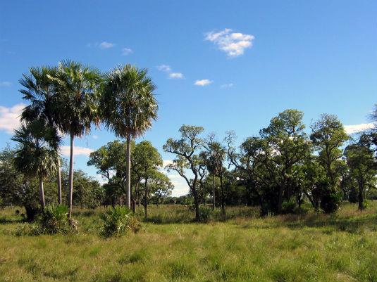 Chaco Boreal Paraguay