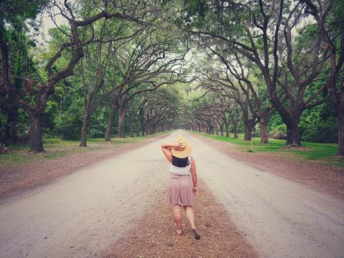 The Avenue at Wormsloe Plantation in Savannah, GA