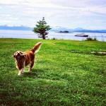 Instagram of the Moment: Keeper of the Watch at Alaska's Five Finger Lighthouse