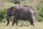 Elephants Storm the Twitterverse