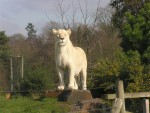 Rare, Adorable White Lion Cubs Set to be Star Attraction in Poland