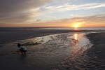 Photo of the Moment: Searching for Sea Creatures at Sunset, Cape Cod