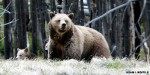 Forest Service says stop taking selfies with bears