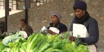 South Africa's urban farming revolution