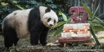 World's oldest panda sets Guinness World Record