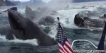 Boater's incredible reaction to whale encounter