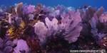 Nurseries bring coral reefs back to life