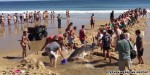 Beachgoers dig channel for stranded great white shark