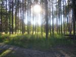 Exploring Estonia's Wilder Side: 4 Bucket-list Worthy Adventures